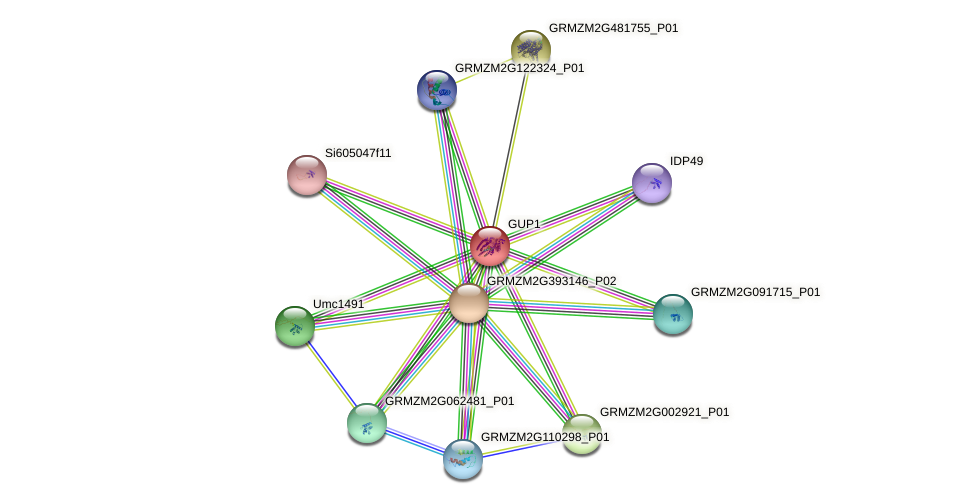 GRMZM2G042981_P01 protein (Zea mays) - STRING interaction network
