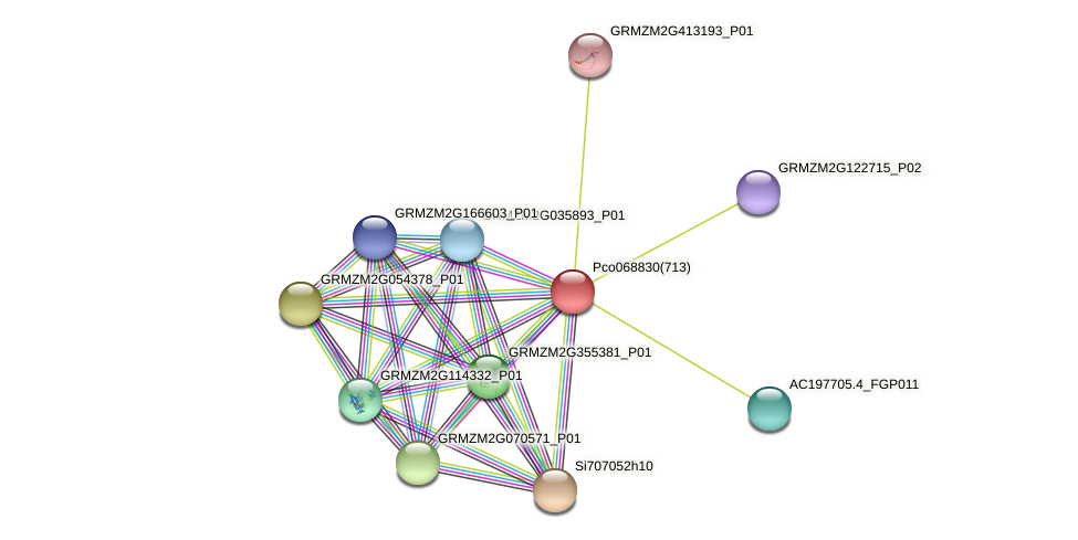 GRMZM2G043056_P01 protein (Zea mays) - STRING interaction network