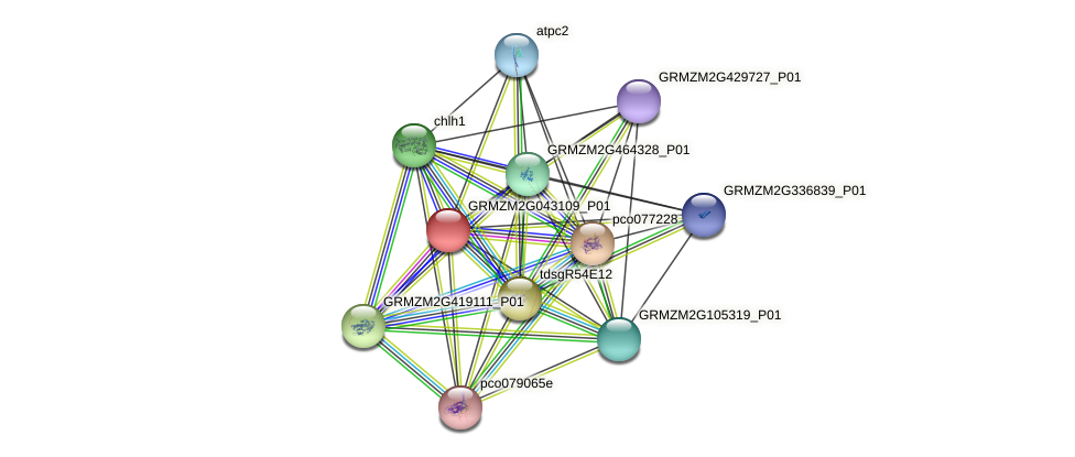 GRMZM2G043109_P01 protein (Zea mays) - STRING interaction network