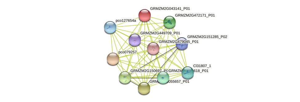 GRMZM2G043141_P01 protein (Zea mays) - STRING interaction network