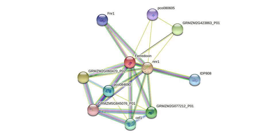 GRMZM2G043162_P01 protein (Zea mays) - STRING interaction network
