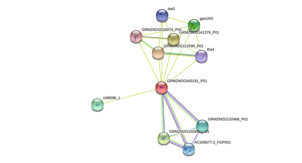 GRMZM2G043191_P01 protein (Zea mays) - STRING interaction network
