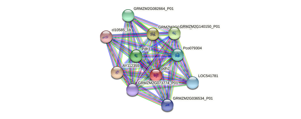 pdh2 protein (Zea mays) - STRING interaction network