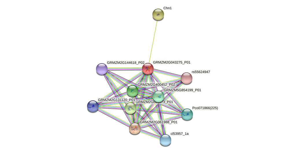 GRMZM2G043275_P01 protein (Zea mays) - STRING interaction network