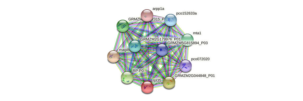 rpl35 protein (Zea mays) - STRING interaction network