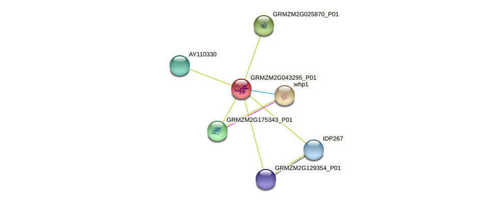 GRMZM2G043295_P01 protein (Zea mays) - STRING interaction network