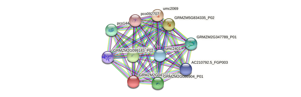 GRMZM2G043394_P01 protein (Zea mays) - STRING interaction network