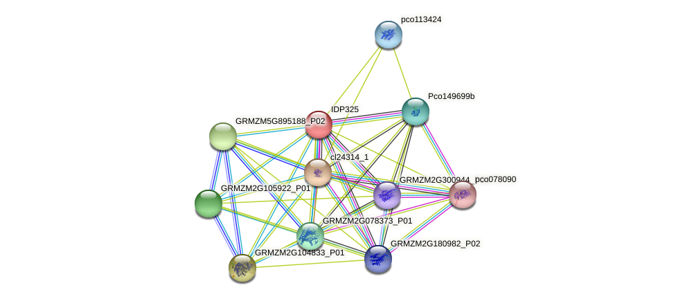 IDP325 protein (Zea mays) - STRING interaction network