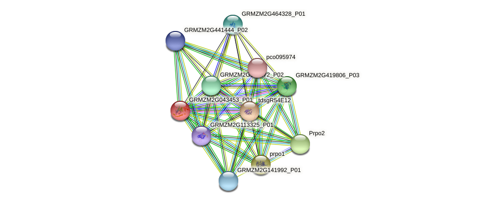 cl561_1 protein (Zea mays) - STRING interaction network