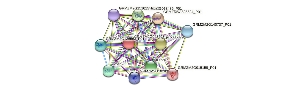 GRMZM2G043498_P01 protein (Zea mays) - STRING interaction network