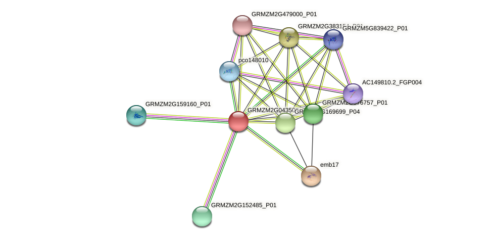 GRMZM2G043500_P01 protein (Zea mays) - STRING interaction network