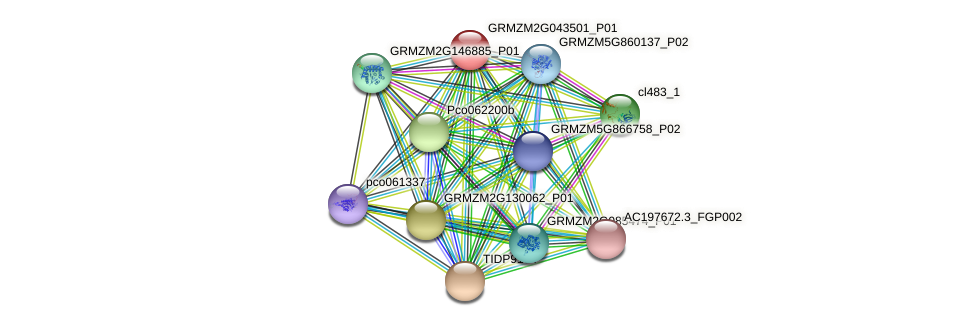 GRMZM2G043501_P01 protein (Zea mays) - STRING interaction network