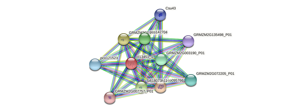 cl13451_1 protein (Zea mays) - STRING interaction network