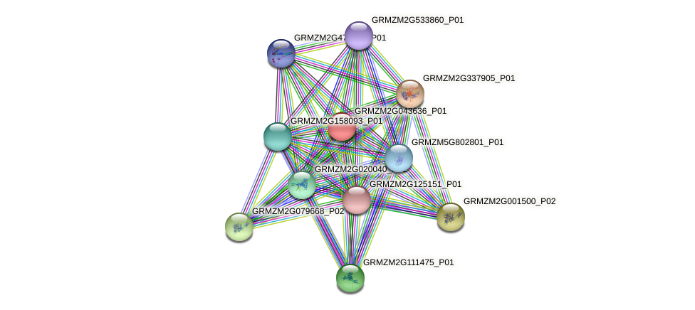 GRMZM2G043636_P01 protein (Zea mays) - STRING interaction network