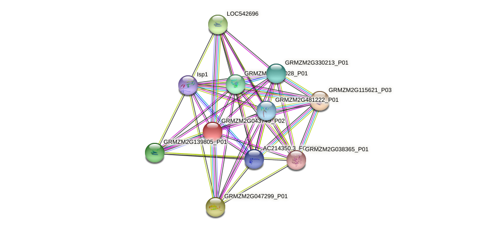 GRMZM2G043749_P01 protein (Zea mays) - STRING interaction network