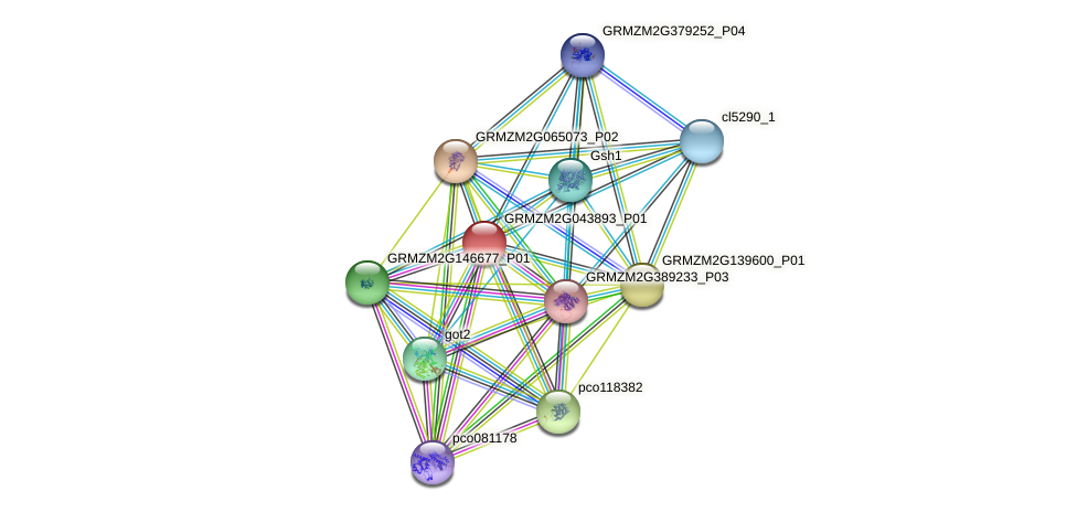 Zm.31393 protein (Zea mays) - STRING interaction network
