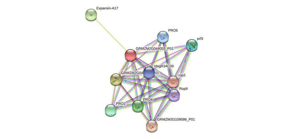 GRMZM2G044055_P01 protein (Zea mays) - STRING interaction network