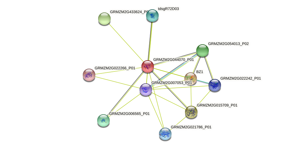 GRMZM2G044070_P01 protein (Zea mays) - STRING interaction network