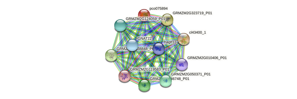 pco075894 protein (Zea mays) - STRING interaction network