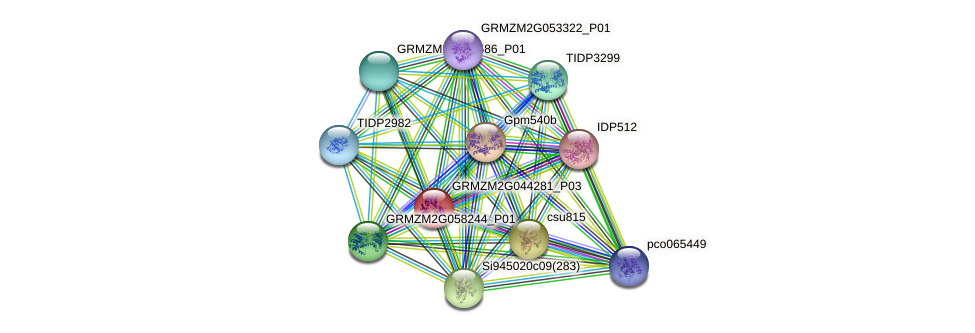 GRMZM2G044281_P01 protein (Zea mays) - STRING interaction network