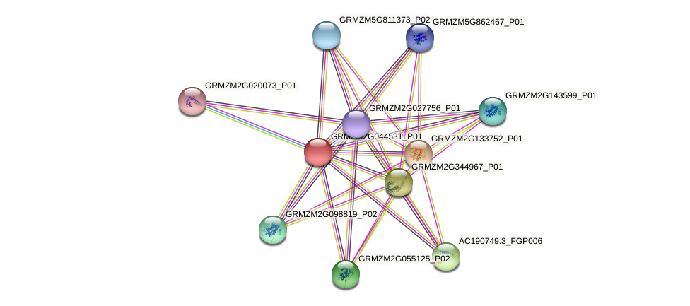 Zm.23496 protein (Zea mays) - STRING interaction network