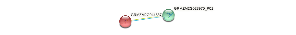 GRMZM2G044537_P01 protein (Zea mays) - STRING interaction network