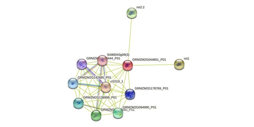 Zm.28234 protein (Zea mays) - STRING interaction network