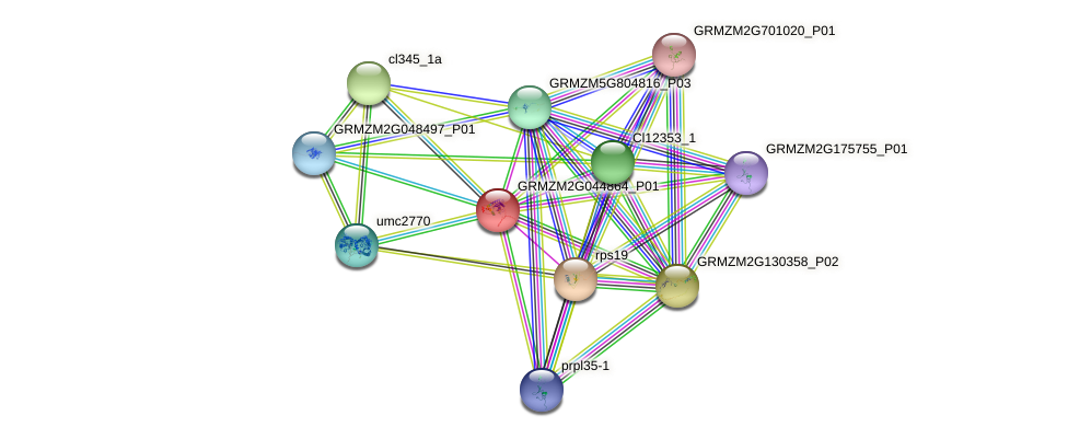 GRMZM2G044864_P01 protein (Zea mays) - STRING interaction network