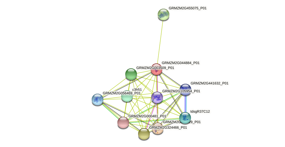 GRMZM2G044884_P01 protein (Zea mays) - STRING interaction network