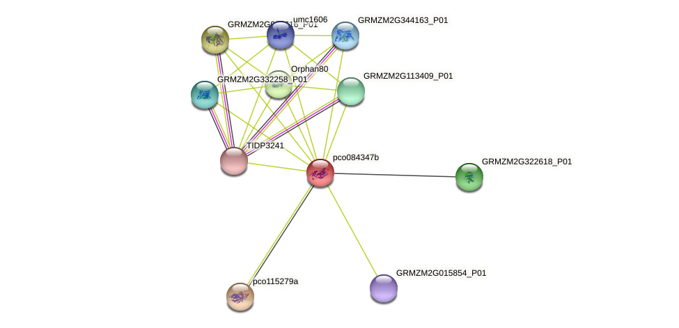 pco084347b protein (Zea mays) - STRING interaction network