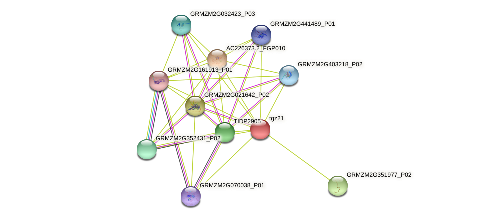 tgz15 protein (Zea mays) - STRING interaction network