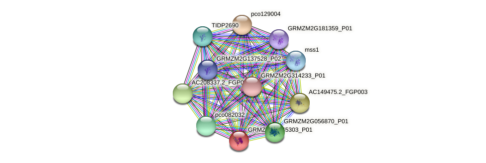 GRMZM2G045303_P01 protein (Zea mays) - STRING interaction network
