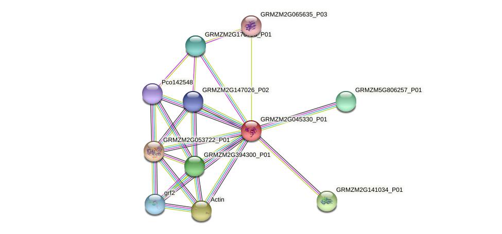 GRMZM2G045330_P01 protein (Zea mays) - STRING interaction network