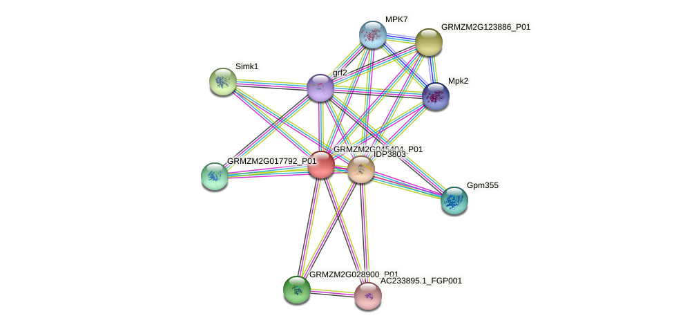 GRMZM2G045404_P01 protein (Zea mays) - STRING interaction network