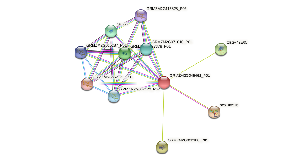 GRMZM2G045462_P01 protein (Zea mays) - STRING interaction network