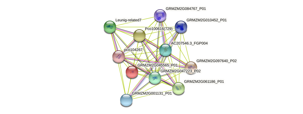 GRMZM2G045565_P01 protein (Zea mays) - STRING interaction network