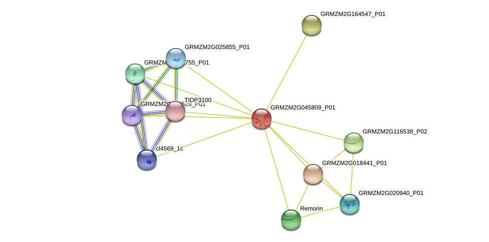 GRMZM2G045809_P01 protein (Zea mays) - STRING interaction network