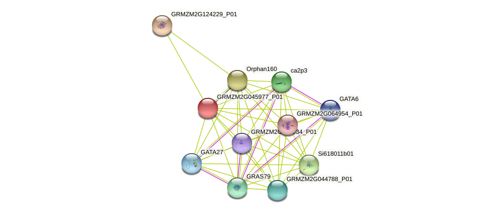 Zm.162576 protein (Zea mays) - STRING interaction network