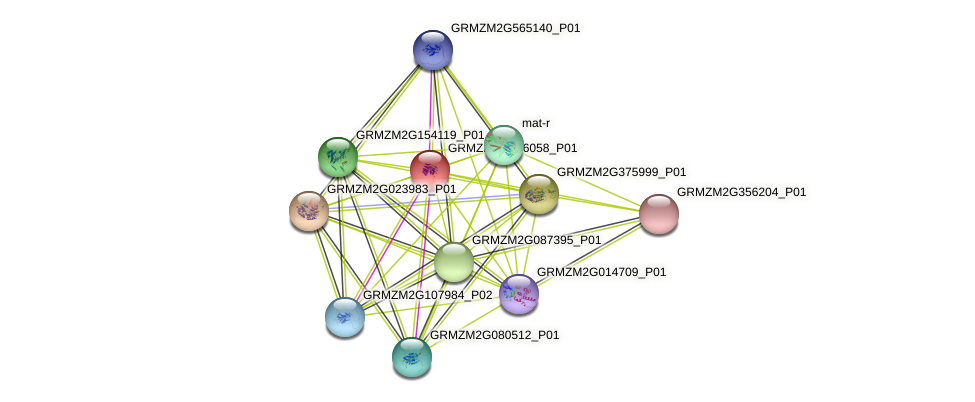 GRMZM2G046058_P01 protein (Zea mays) - STRING interaction network
