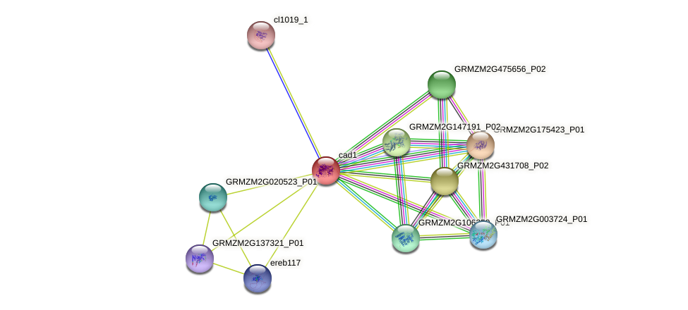 cad1 protein (Zea mays) - STRING interaction network