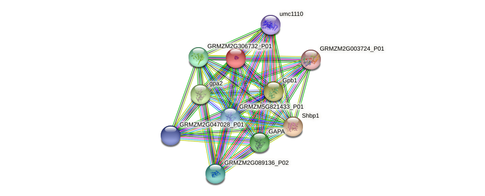 IDP1438 protein (Zea mays) - STRING interaction network