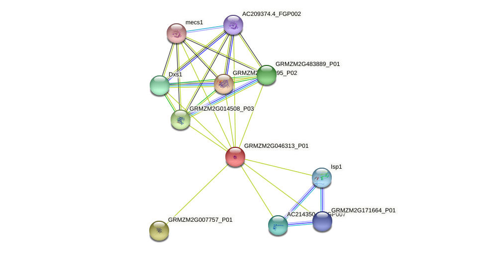 Zm.74330 protein (Zea mays) - STRING interaction network