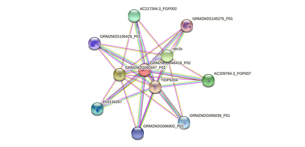 GRMZM2G046418_P01 protein (Zea mays) - STRING interaction network