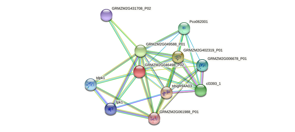 GRMZM2G046498_P02 protein (Zea mays) - STRING interaction network