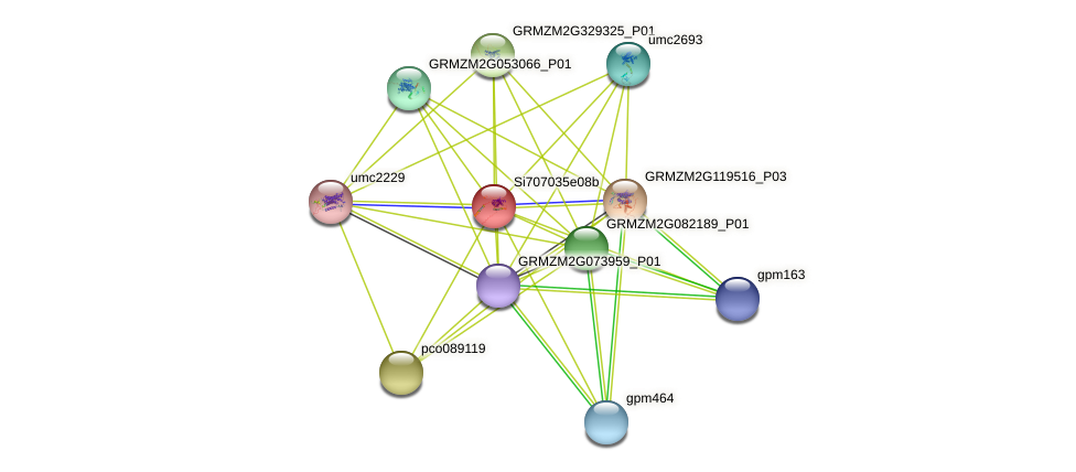 GRMZM2G046537_P01 protein (Zea mays) - STRING interaction network