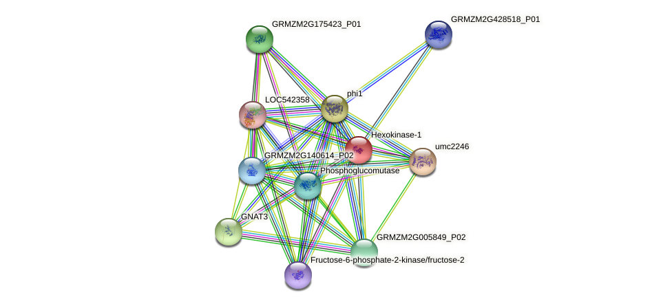 GRMZM2G046686_P01 protein (Zea mays) - STRING interaction network