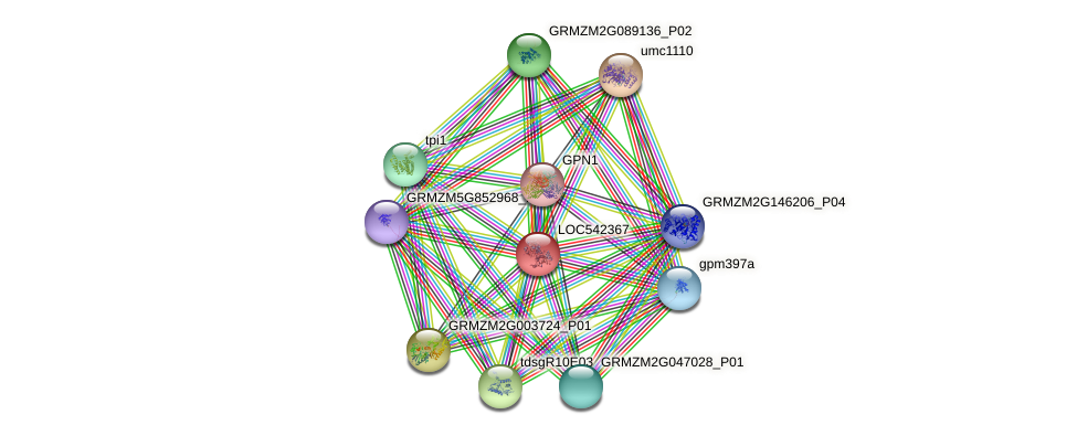 GPC1 protein (Zea mays) - STRING interaction network