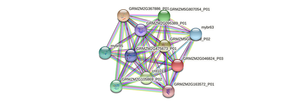 GRMZM2G046824_P03 protein (Zea mays) - STRING interaction network