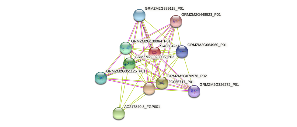 Zm.84642 protein (Zea mays) - STRING interaction network