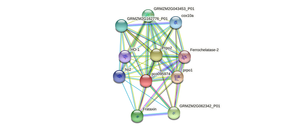 pco095974 protein (Zea mays) - STRING interaction network